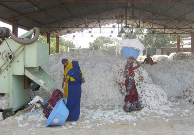 In India Cotton under severe pressure